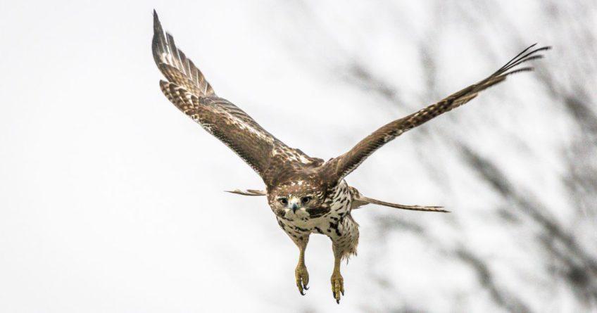Bird of ;prey